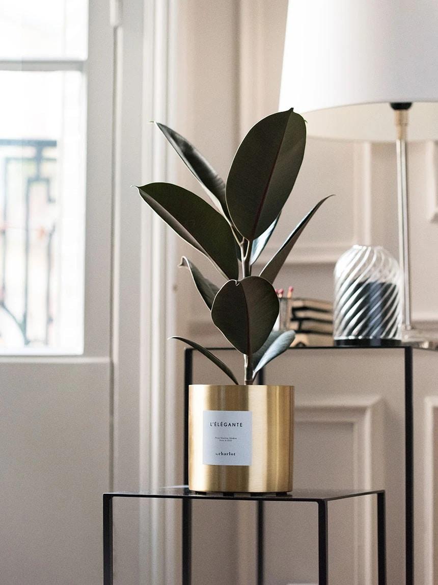 plante élégante
